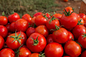 Picture Vegetables Tomatoes Many Red Food