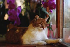 Fotos Hauskatze Fenster Blick ein Tier