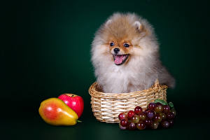 Wallpapers Dogs Grapes Apples Pears Spitz Wicker basket Animals