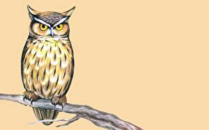 Bilder Gezeichnet Eulen Vögel Ast ein Tier