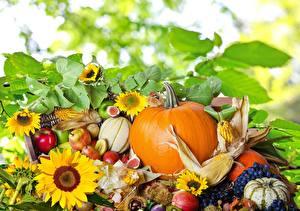 Images Still-life Pumpkin Helianthus Grapes Corn Pears Food