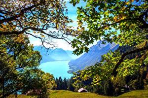 Bilder Schweiz Gebirge See Landschaftsfotografie Ast Brienz Natur