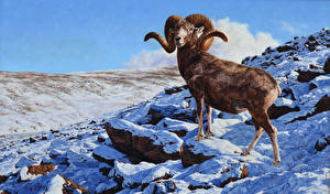 Pictures Pictorial art Sheep Snow Greg Beecham, archar