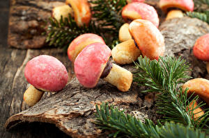 Hintergrundbilder Viel Pilze Natur Lebensmittel