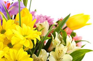 Hintergrundbilder Tulpen Blumen