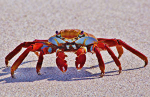 Fotos Gliederfüßer Krabben Hautnah