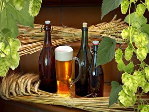 Hintergrundbilder Getränke Bier Echter Hopfen Becher Flasche Ähre Lebensmittel