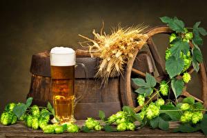 Fotos Getränke Bier Echter Hopfen Becher Ähre Lebensmittel