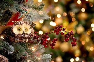 Fotos Feiertage Neujahr Spielzeuge Eulen Ast Tiere