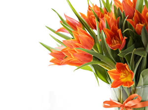 Wallpapers Tulips Many Orange Flowers