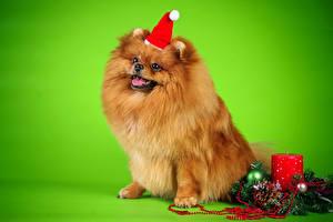 Hintergrundbilder Hunde Feiertage Neujahr Kerzen Spitz Mütze Ast Tiere