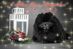 Hintergrundbilder Feiertage Neujahr Hunde Kerzen Spitz Schwarz Ast Tiere