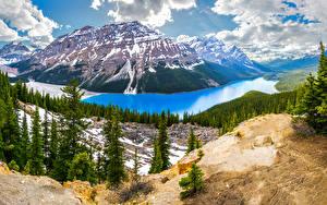 Photo Scenery Canada Parks Lake Mountain Banff Spruce Clouds Peyto Lake Nature