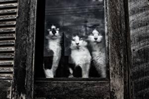 Hintergrundbilder Katze Drei 3 Fenster Glas ein Tier