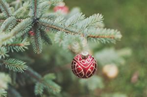 Fotos Feiertage Neujahr Kugeln Ast Weihnachtsbaum