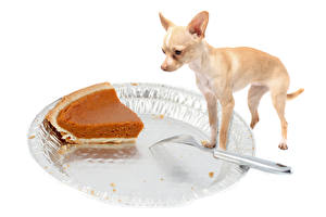 Picture Dogs Pie Chihuahua Fork Russkiy Toy animal
