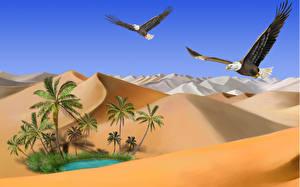 Image Bird Painting Art Desert Hawk Bald Eagle Sand animal Nature