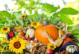 Pictures Pumpkin Corn Pears Grapes Helianthus Food Flowers