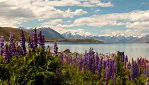 Pictures New Zealand Landscape photography Lake Lupinus Clouds Lake Tekapo Nature