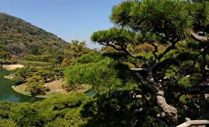 壁纸、、日本、庭園、木、Takamatsu Ritsurin garden、自然