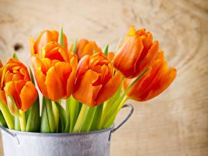 Image Tulips Orange Flowers