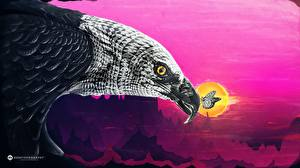 Image Eagle Butterflies Creative Beak animal