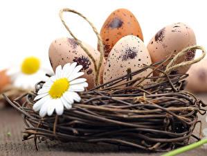 Fotos Feiertage Ostern Kamillen Ei Weidenkorb Nest