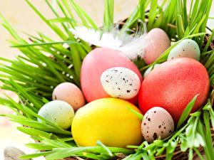 Hintergrundbilder Feiertage Ostern Federn Eier Nest