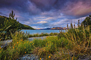 Pictures New Zealand Lake Scenery Sky Grass Lake Tekapo Nature