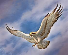Bilder Falken Gezeichnet Vögel Tiere