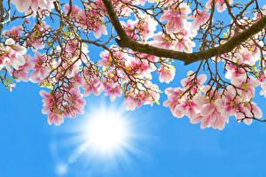 Hintergrundbilder Blühende Bäume Großansicht Lichtstrahl Ast Blumen