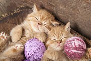 Pictures Cat Kittens Two Sleep Fluffy Red orange Animals