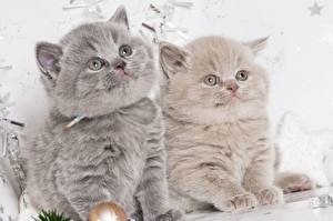 Wallpaper Cats Kittens Two Fluffy Staring animal