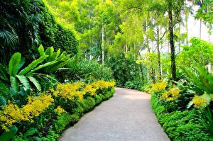 Pictures Singapore Gardens Shrubs Trees Botanic Gardens Nature