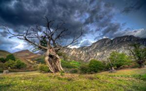 Photo Mountain Storm cloud Trees Grass Nature