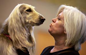 Hintergrundbilder Hunde Windhund Afghanischer Windhund Mädchens