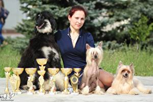 Bilder Hund Auszeichnung Windhund Chinese Crested Afghanischer Windhund Mädchens