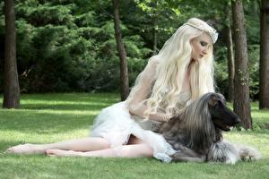Bilder Hund Windhund Blond Mädchen Afghanischer Windhund Tiere Mädchens