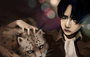 Picture Attack on Titan Lynxes Levi Ackerman Animals