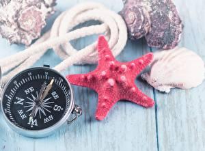 Hintergrundbilder Muscheln Geographie Seesterne Kompass