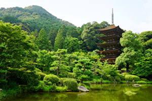 壁纸、、日本、ガーデン、池、木、Yamaguchi、自然