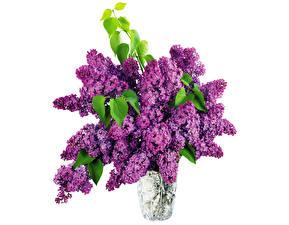 Bilder Flieder Vase Ast Blüte