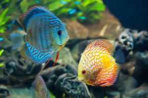 Images Underwater world Fish 2 animal