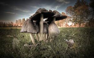 Hintergrundbilder Wald Hautnah Pilze Natur Gras HDR
