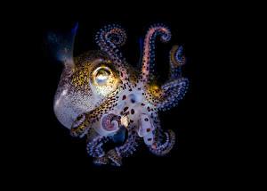 Bilder Unterwasserwelt Kraken