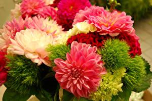 Hintergrundbilder Blumensträuße Georginen Nahaufnahme Blumen