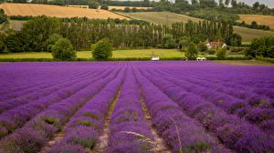 Bilder Acker Lavendel Landschaftsfotografie Bäume Natur Blumen