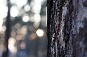 Bilder Großansicht Rinde Baumstamm Natur