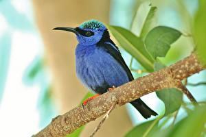 Hintergrundbilder Vögel Tiere