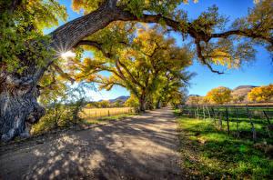 Bilder USA Sommer Straße Bäume Lichtstrahl HDRI Arizona Natur